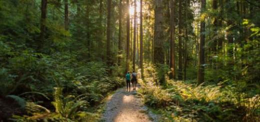 идти по лесу во сне