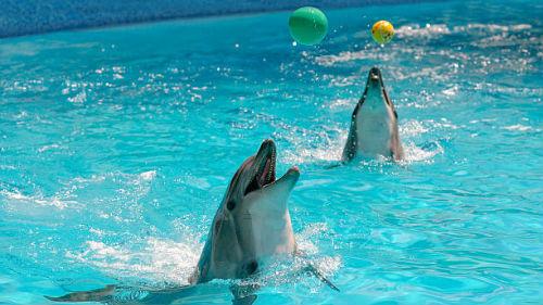 игра в воде