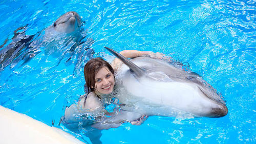 дельфины в бассейне во сне