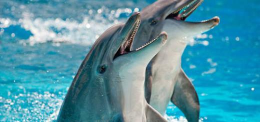 дельфины в воде во сне
