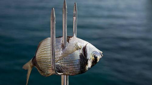 поймать рыбу гарпуном