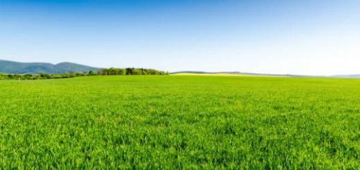 зеленое поле во сне