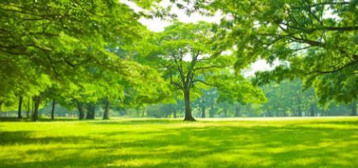 зеленые деревья во сне