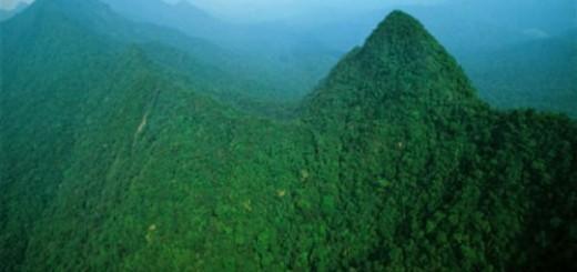 зеленые горы во сне