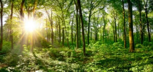 зеленый лес во сне