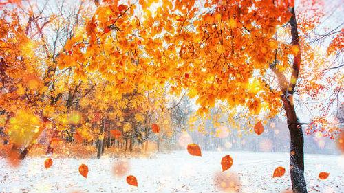 видеть зиму не в сезон