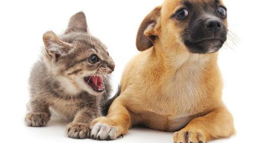 к чему снится злая кошка