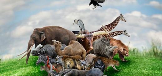 дикие звери во сне