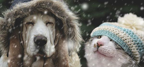 холодная пора