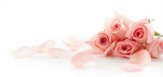 лепестки роз во сне