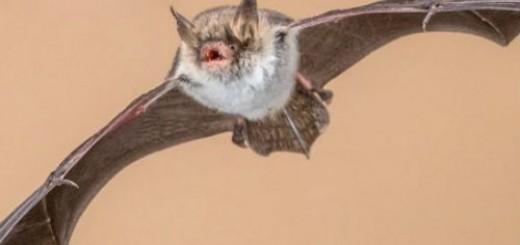 летучая мышь нападает во сне