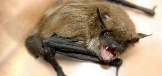 летучая мышь укусила во сне