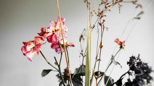 к чему снятся засохшие цветы