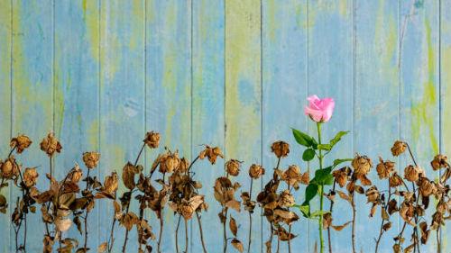 поливать завядшие цветы