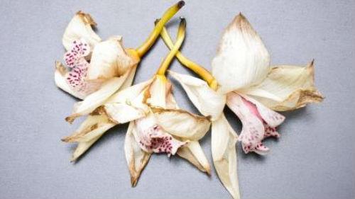 увядшие орхидеи