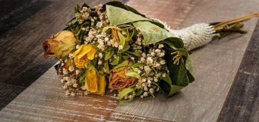 засохшие цветы во сне