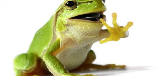 зеленая лягушка во сне