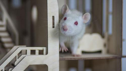 как назвать девочку в год металлической крысы