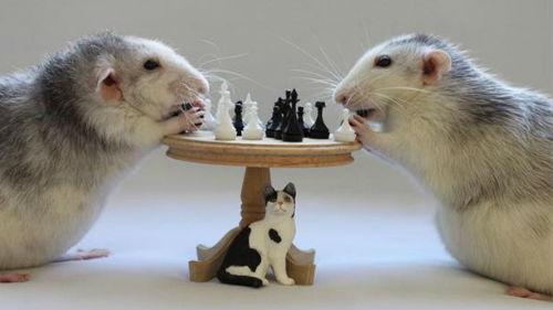 прорицание белой крысы на 2020 год