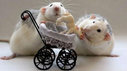 пророчество белой крысы на 2020 год