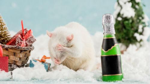 прогноз белой крысы на 2020 год
