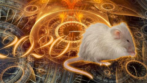 как встречать новый 2020 белой крысы
