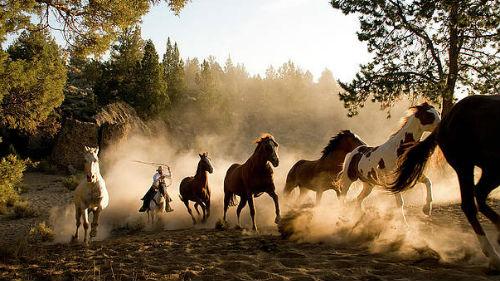 к чему снится лошади бегут