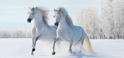 лошади бегут во сне