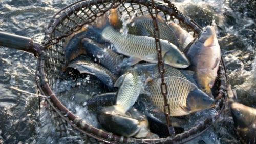 ловить рыбу сачком во сне