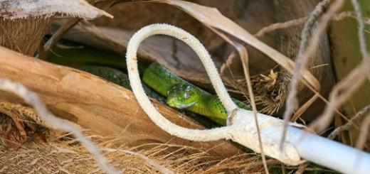 ловить змей во сне