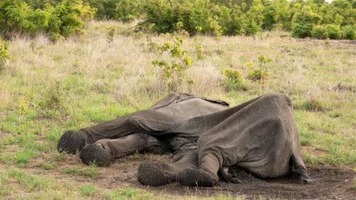 к чему снятся мертвые животные