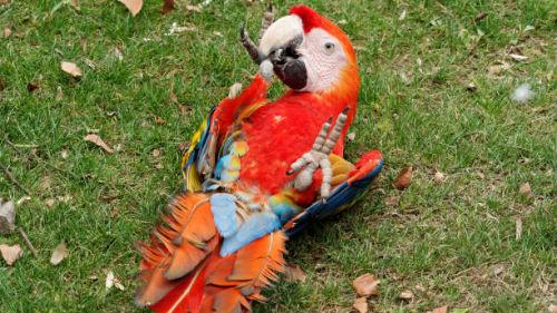 к чему снится мертвый попугай